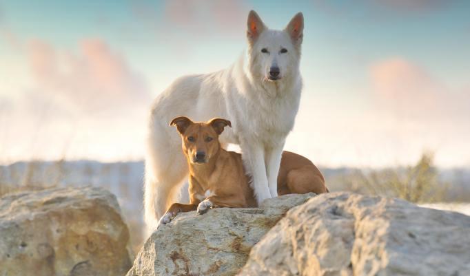 Hundeshooting für 2 Hunde
