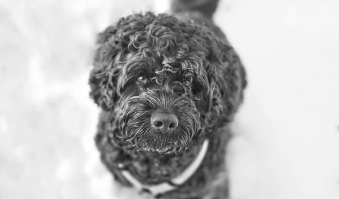 Fotoshooting für Hund und Halter
