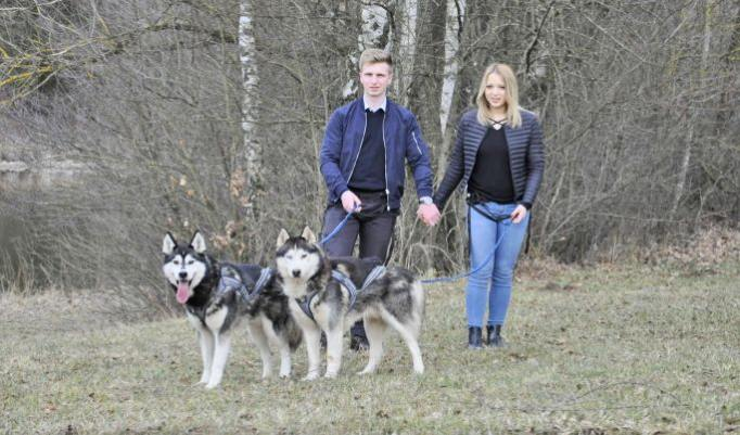 Schlittenhund Wanderung in Jagstzell