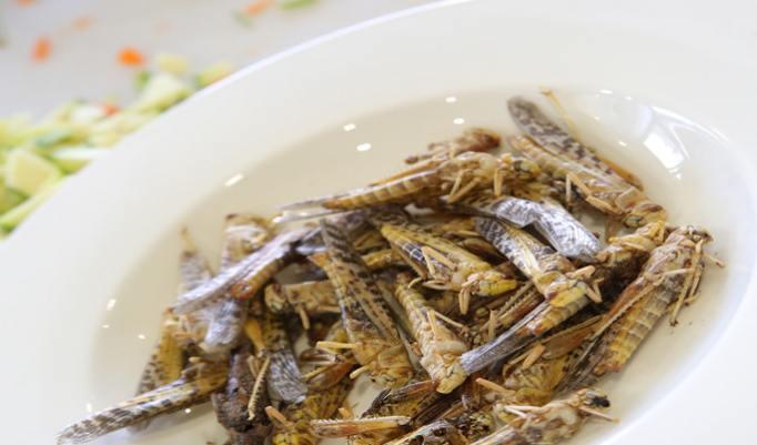 Insekten Menü