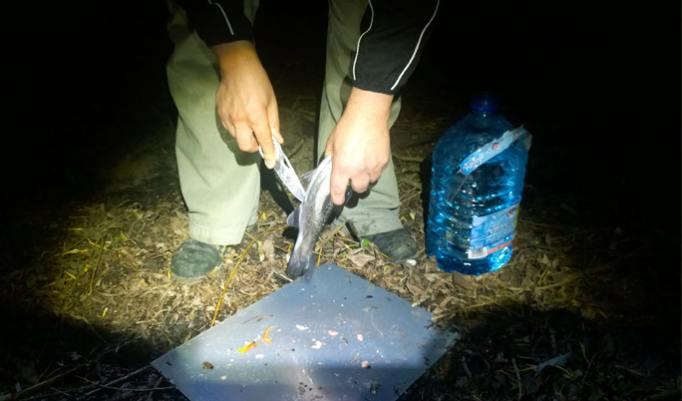 Fisch ausnehmen bei Survival-Ausbildung