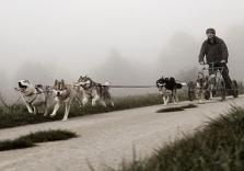 Husky Nachtwanderung für die ganze Familie im Altmühltal